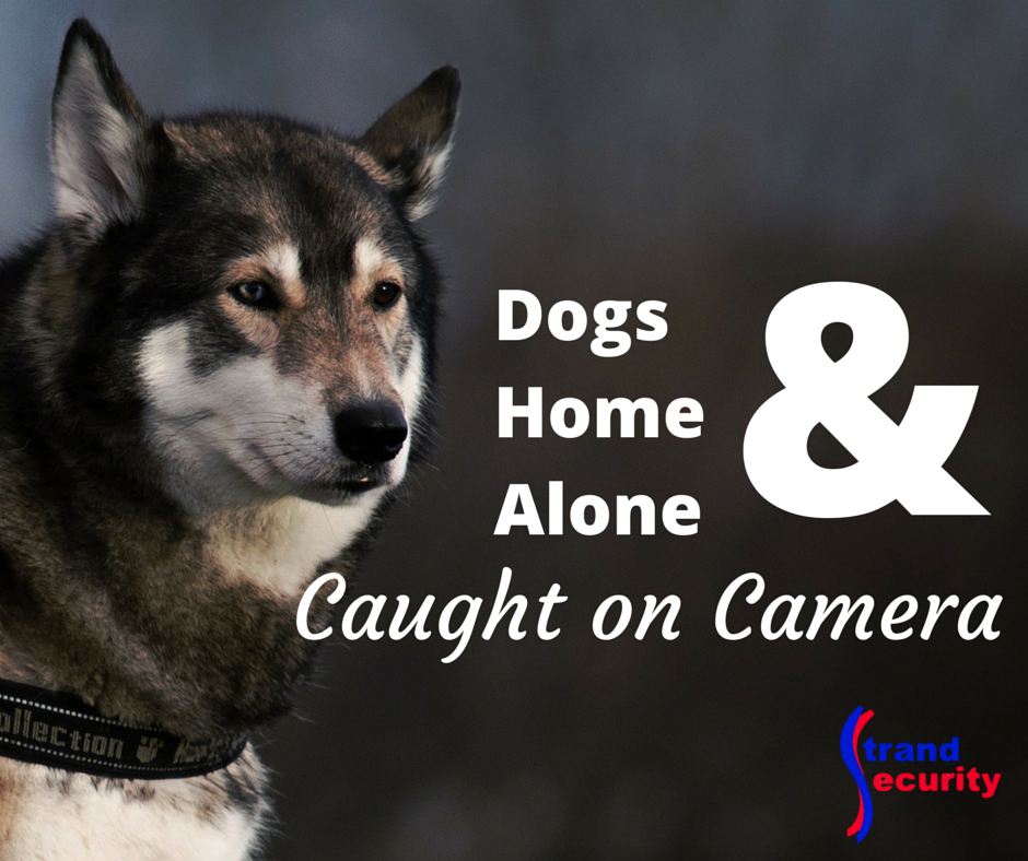 Dogs home alone and caught on camera