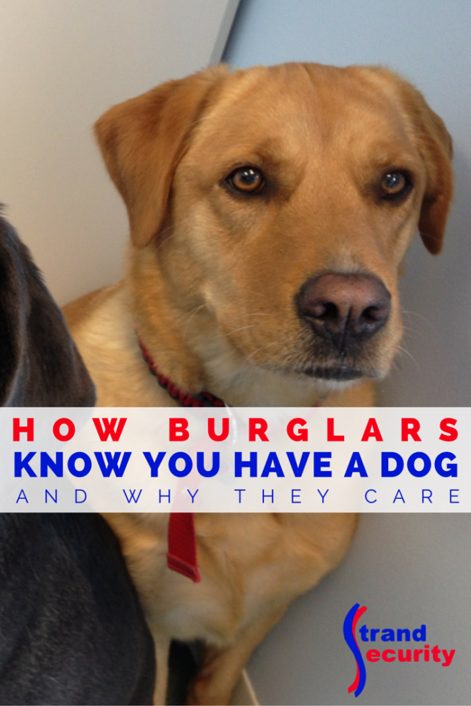 Burglars do not like dogs! Myrtle Beach Alarm Systems